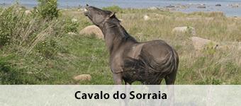 Cavalo do Sorraia