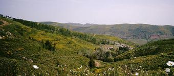 Parque Serra de Sao Mamede2
