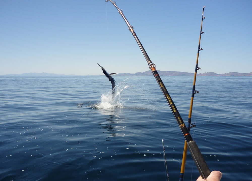 pesca desportiva-algarve