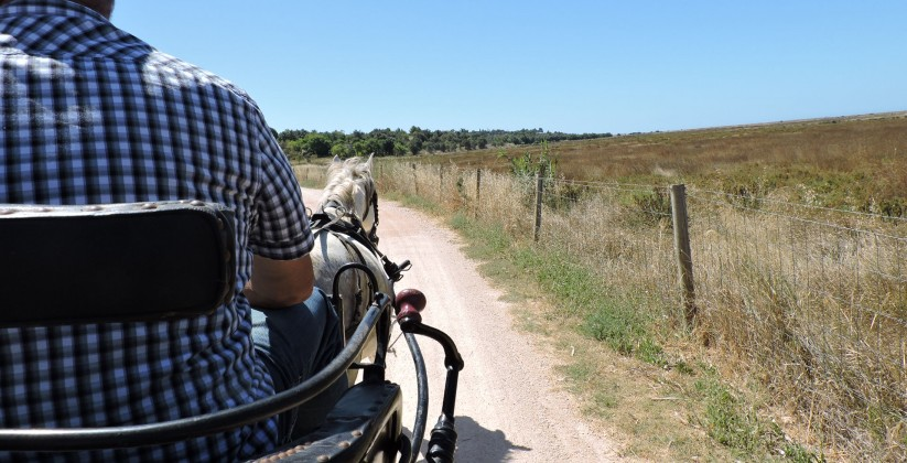 Route 1 - Rocha Delicada