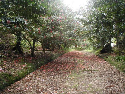 Jardim Pitoresco