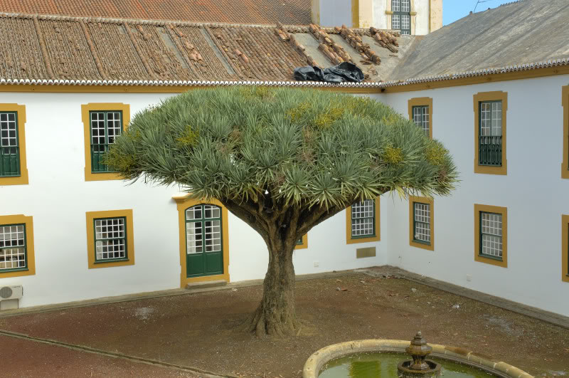 Jardim do Palacio dos Capitaes Generais