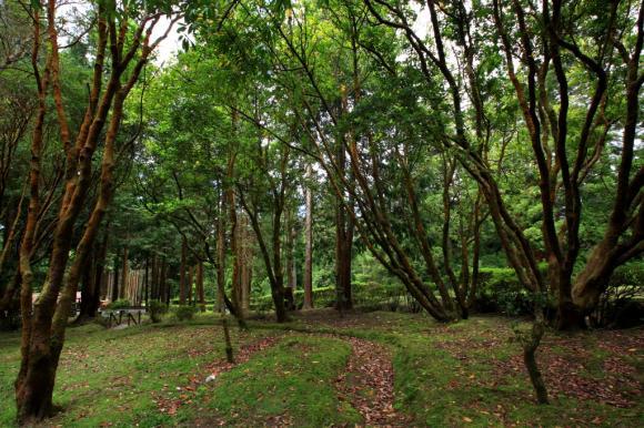 Reserva Florestal de Recreio do Cerrado dos Bezerros