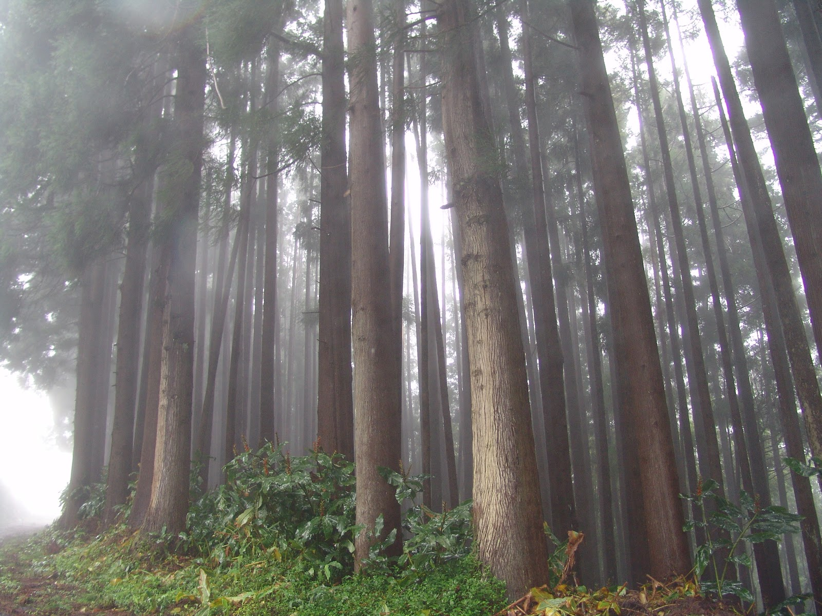 Florestal do Pico Alto