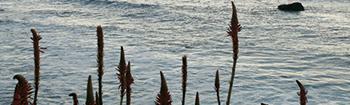 Lago do Linho