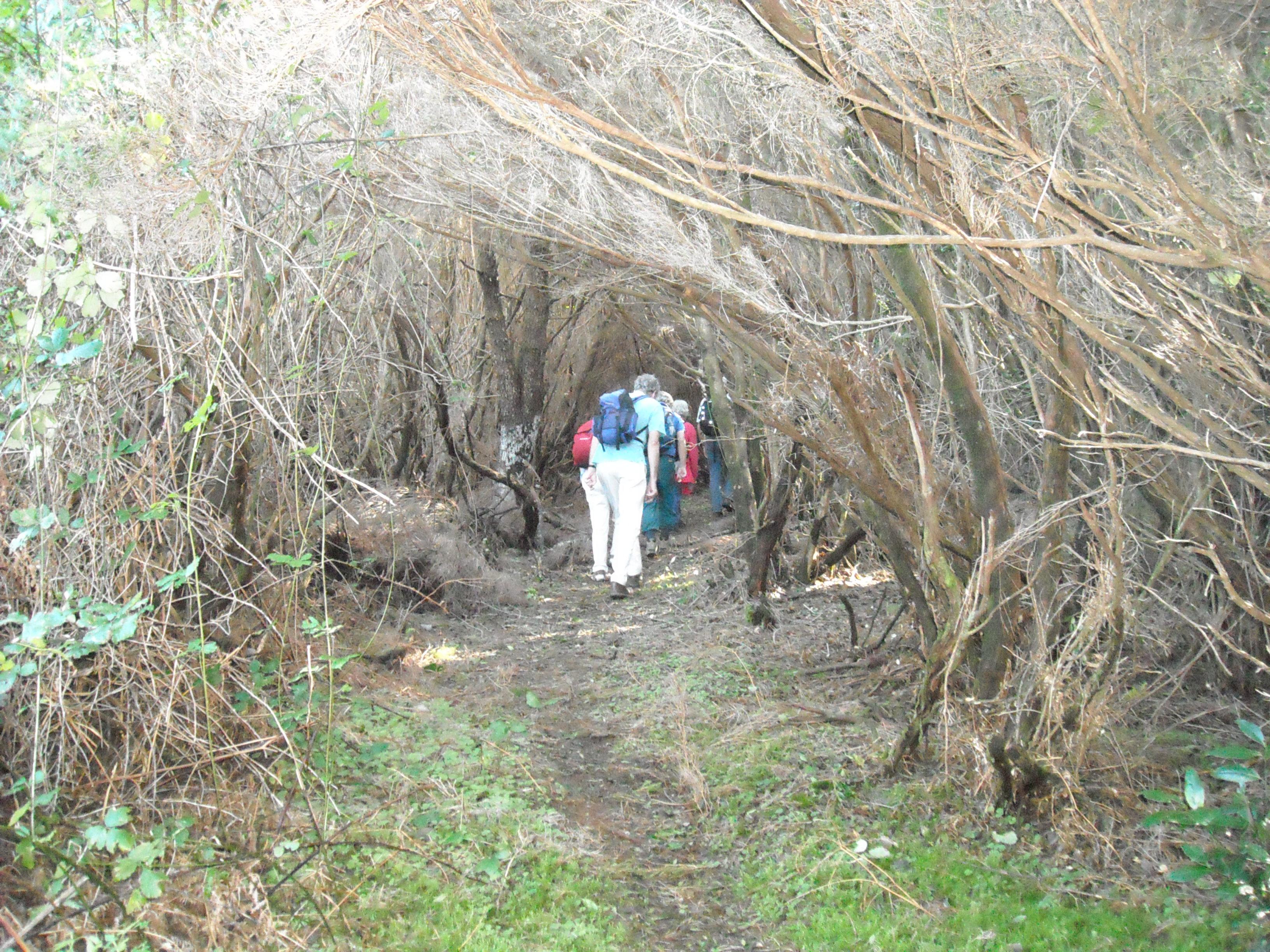 trilhos ilha da madeira2