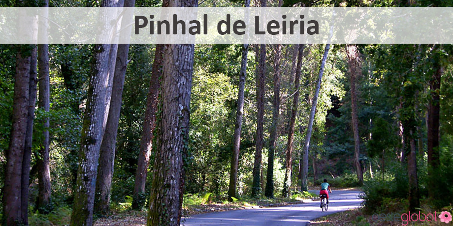 PinhalLeiria_OesteGlobal