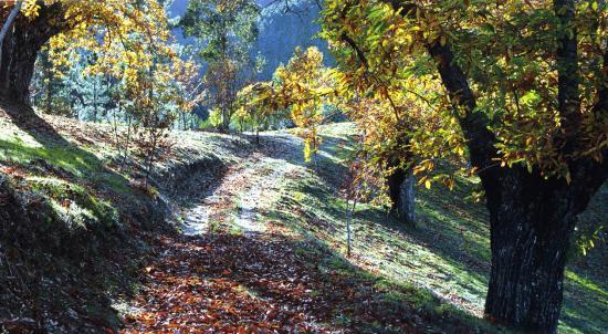 Serra da Gardunha2